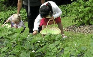 Parmi les sorties proposées : aller cueillir ses fruits et légumes au grand air.