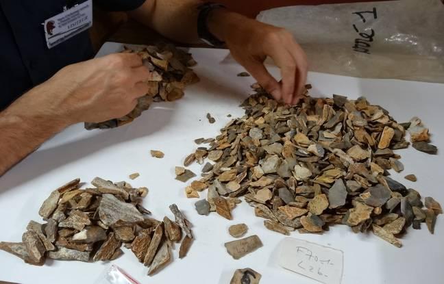 Des milliers de restes osseux ont été triés et 47 nouveaux restes fossiles appartenant à La Ferrassie ont été reconnus.