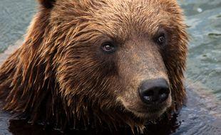 Un ours. Illustration.