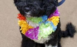 Bo, chien d'eau portugais, est le nouveau chien de la Maison Blanche. Il a été accueilli par les Obama le 12 avril 2009.
