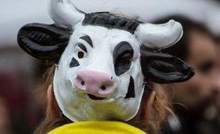 Un militant de la Confédération paysanne déguisé en vache manifeste contre le projet de ferme des 1.000 vaches, à Abbeville le 28 octobre 2014