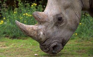 Est-il possible d'élaborer un modèle mathématique pour sauver les rhinocéros, décimés jour après jour par le braconnage pour leur corne? C'est le pari que vont relever des mathématiciens du monde entier, réunis la semaine prochaine à Johannesburg.