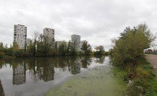 L'égérie dense s'est accrochée à la Vilaine et s'est développée, malgré les opérations de faucardage. Ici à Rennes, le 31 octobre 2019.