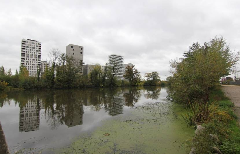 Rennes: La Vilaine ne parvient pas à se défaire de l'égérie, plante très invasive