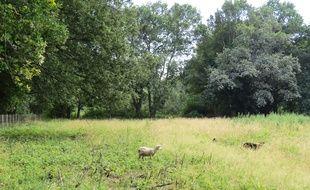 Le site du Champ de manœuvre est parsemé de bois et prairies. On y trouve des moutons mais pas encore d'habitants.