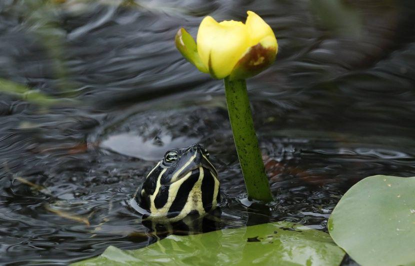Belgique : La multiplication des sauvetages de reptiles, dont des crocodiles domestiques, inquiète Pairi Daiza