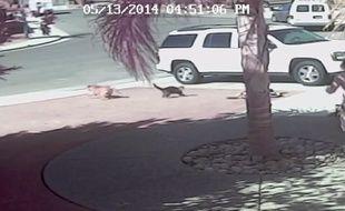 Un chat défend son maître attaqué par un chien.