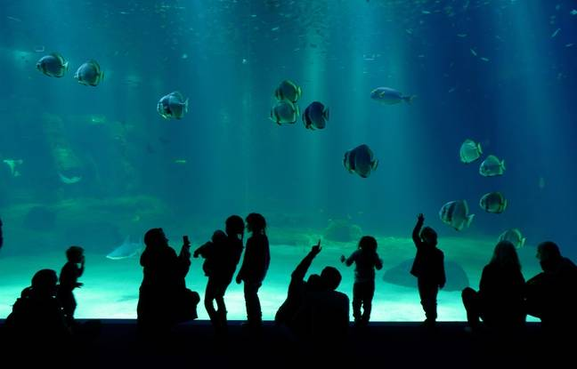 L'aquarium géant de Nausicaa