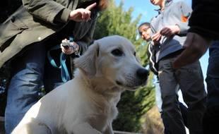 Ostwald le 29 02 2012.l'association Handi chien de Strasbourg organise à Ostwald une opération pour sensibiliser les enfants de 3 à 12 ans à bien et mieux cohabiter avec les chiens.
