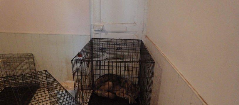 Un des chiens retrouvés affamés dans une cage non adaptée.