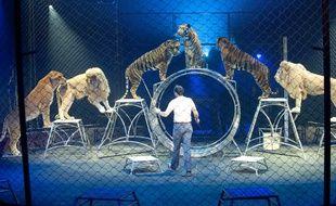 Au cirque Arlette-Gruss, un dompteur s'exerce avec ses animaux. Archives