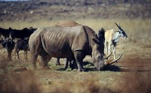 Le Vietnam surtout, mais aussi la Chine et la Thaïlande, jouent un rôle majeur dans le trafic d'ivoire d'éléphants et de cornes de rhinocéros, provoquant le massacre de ces animaux en Afrique du Sud et centrale, souligne lundi l'organisation écologiste WWF.