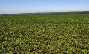 """Un """"soja miraculeux"""" résistant à plusieurs maladies a été mis au point après dix ans de recherches menées conjointement par des chercheurs des Etats-Unis et du Paraguay."""