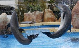 Des dauphins à Marineland, le plus grand parc marin d'Europe, le 12 décembre 2012 à Antibes en France