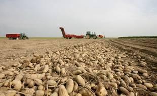Illustration de la récolte de pommes de terre.