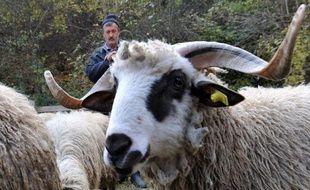 A l'entrée de Sarajevo, près d'une ancienne ligne de front et loin des querelles politiques de la Bosnie, une cinquantaine de commerçants serbes et musulmans, qui se firent pourtant la guerre, sympathisent et vendent leurs moutons pour la fête de l'Aïd, dimanche.