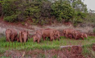 Photo aérienne du groupe d'éléphants, prise le 6 juin dernier.