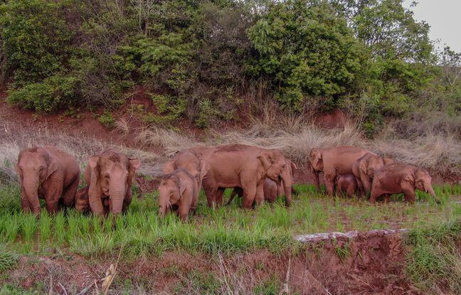 648x415 photo aerienne groupe elephants prise 6 juin dernier
