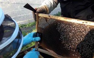 Des ruches connectées vont être installées sur le campus de l'Université Paul-Sabatier.