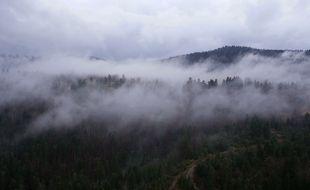 La forêt amazonienne voit passer des quantités considérables de vapeurs d'eau au-dessus de ses arbres.