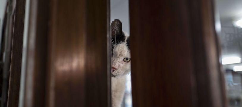 Un chat abandonné dans un refuge à Amsterdam (Pays-Bas)