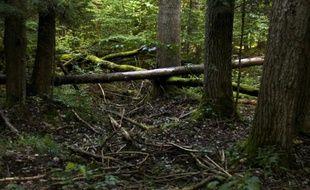 La forêt de Bialowieza en Pologne, le 20 août 2010