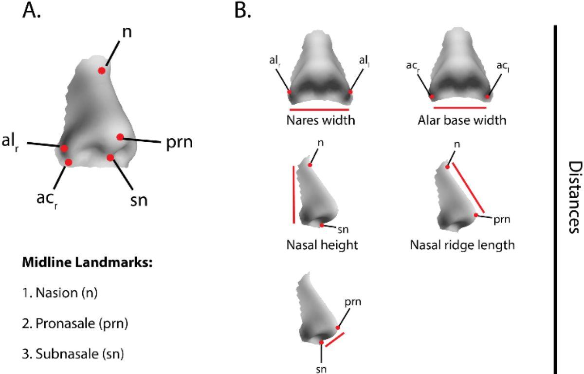 Les formes de nez dépendants du climats dans lequel évoluent les ancêtres d'une personne – Screenshot PLOS.org