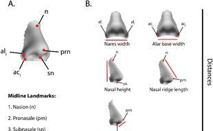 Les formes de nez dépendants du climats dans lequel évoluent les ancêtres d'une personne