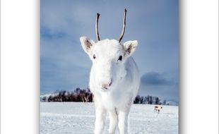 La photographe d'Oslo en Norvège était en randonnée lorsqu'elle a aperçu le bébé renne.