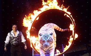 Les spectacles de fauves dans les cirques bientôt interdits en France.