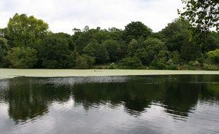 Trois étangs de Hampstead Heath sont accessibles à la baignade, mais un seul d'entre eux est réservé aux femmes.