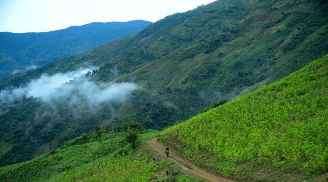 La Colombie veut traquer les narcotrafiquants dans les parcs naturels