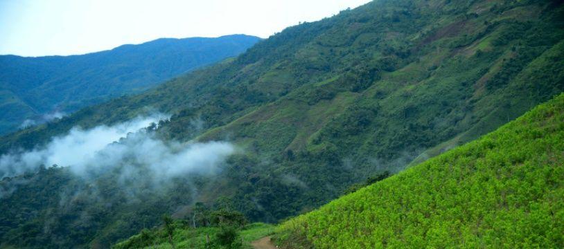 Des plantations de coca à Pueblo Nuevo en Colombie le 10 juillet 2016