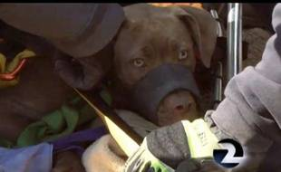 Capture d'écran d'une vidéo du sauvetage d'une chienne en Californie, le 30 mars 2014.