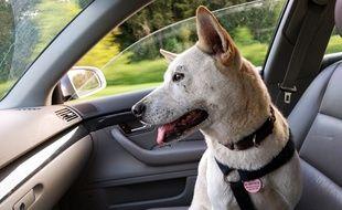 Un chien à l'intérieur d'une voiture. Image d'illustration.