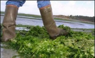 Quelque 2.000 personnes de la commune de La Coquille (Dordogne) étaient toujours privées d'eau potable lundi, après quatre jours d'interdiction, les analyses effectuées sur le réseau ayant décelé une présence d'algues encore supérieure à la normale, a annoncé la préfecture.