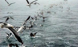 Environ 2.000 oiseaux ont été retrouvés morts jeudi dans un rayon de six kilomètres autour de Santo Domingo, sur le littoral du centre du Chili, a déclaré vendredi sur une radio locale le directeur d'un musée de sciences naturelles, accusant les pêcheurs opérant sur la zone.