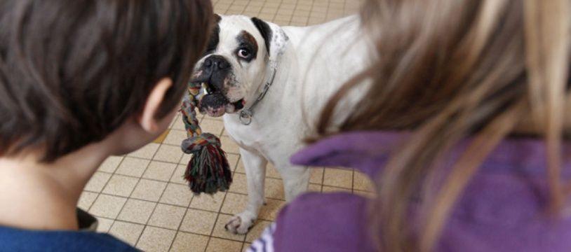 Un atelier pour apprendre aux enfants à éviter les morsures de chien à Emmerin (59).