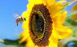 Les polluants atmosphériques émis par les moteurs diesel peuvent perturber la capacité des abeilles à butiner en transformant les molécules parfumées dégagées par les fleurs, met en garde une étude publiée jeudi.