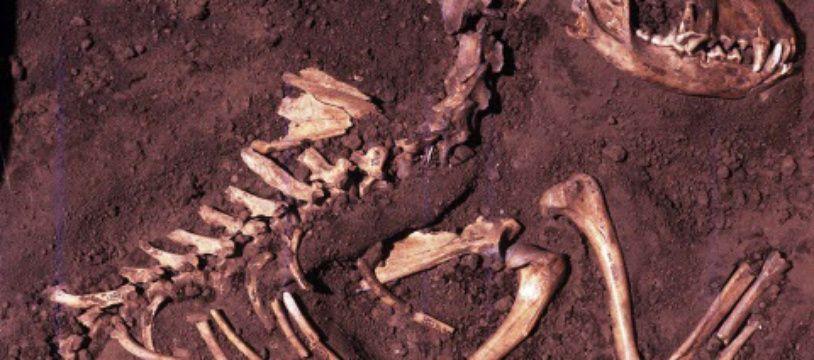 Fossile: illustration