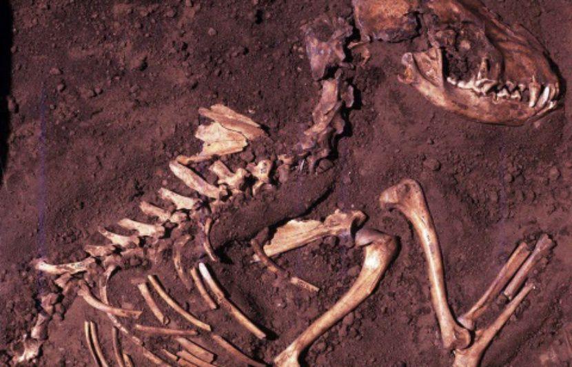 Argentine: Un cimetière de dinosaures vieux de 220 millions d'années mis au jour dans l'ouest