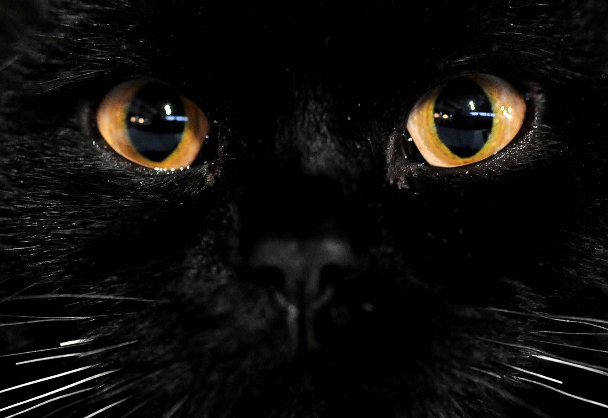 Black Cat With Pink Scary Eyes: Une Journée Internationale Pour Valoriser Les Chats Noirs