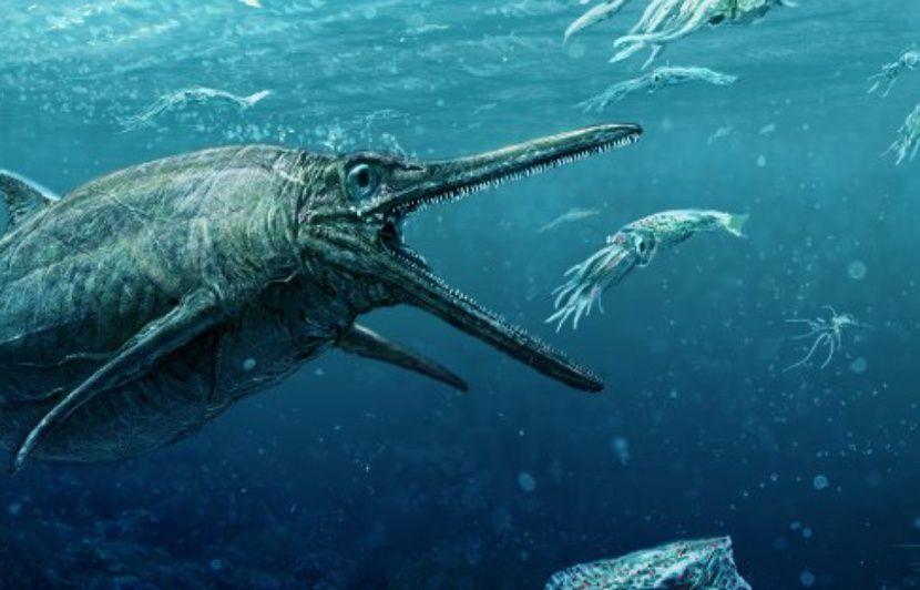 Assez Un monstre marin, digne des pires créatures de films d'horreur  JM95