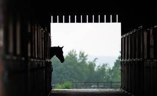 Un cheval dans une écurie (illustration)