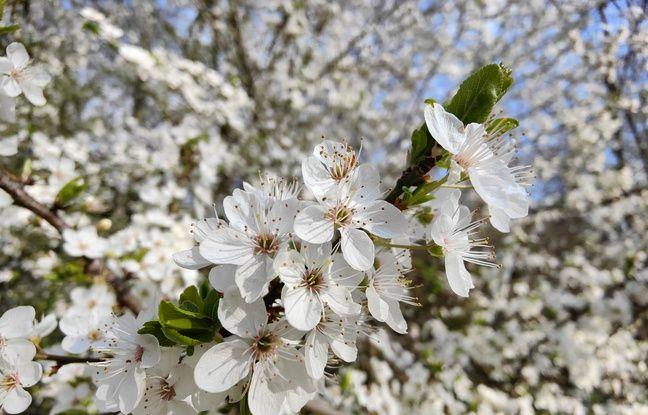 Photographier le printemps avec l'Oppo Find X III Pro, c'est... naturel.