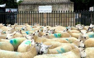 Un élevage de moutons