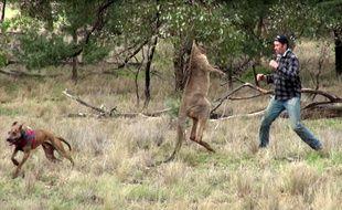 L'Australien Greig Tonkins est intervenu face à un kangourou sauvage pour sauver son chien.