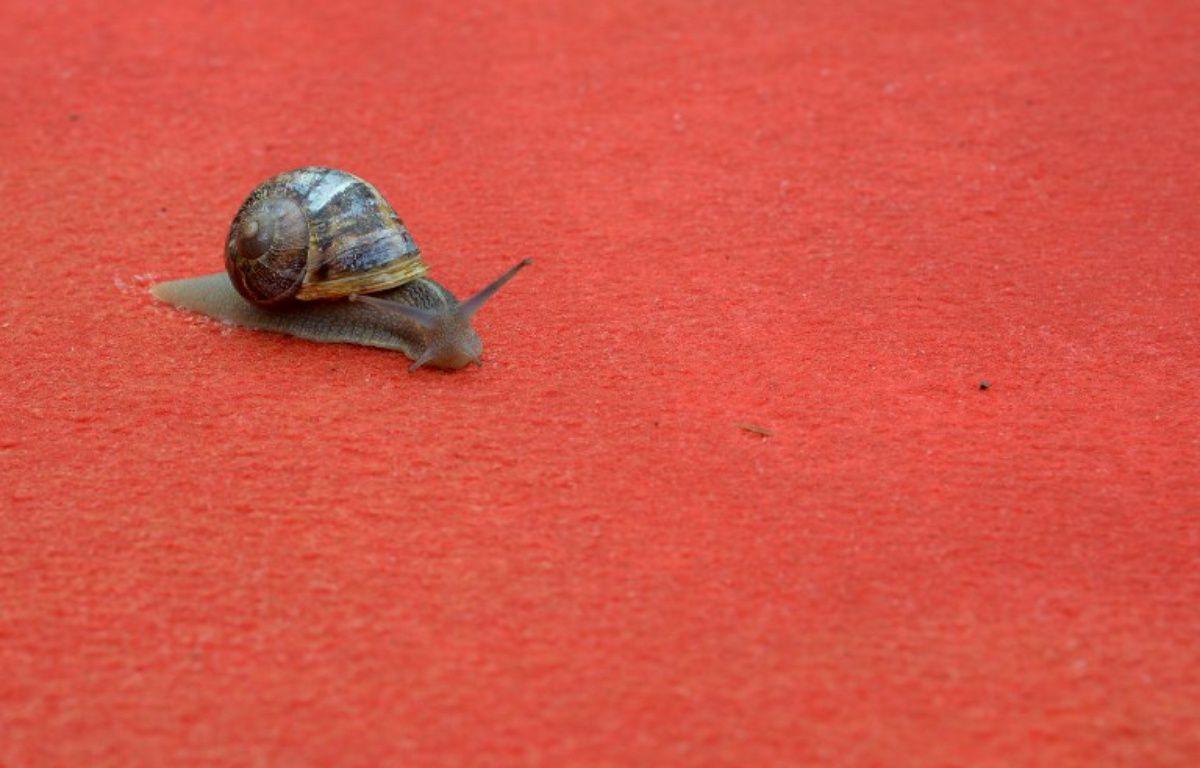 Un escargot sur le tapis rouge à Cannes en 2012. – ALBERTO PIZZOLI / AFP