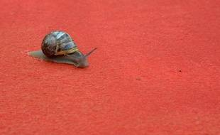 Un escargot sur le tapis rouge à Cannes en 2012.