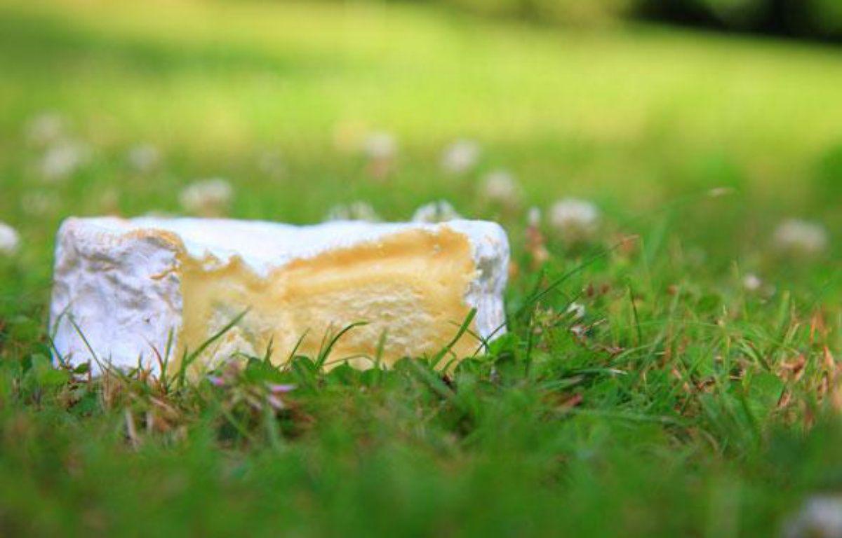 Le Camembert de Normandie, 27 avril 2009. – TOURNERET / SIPA